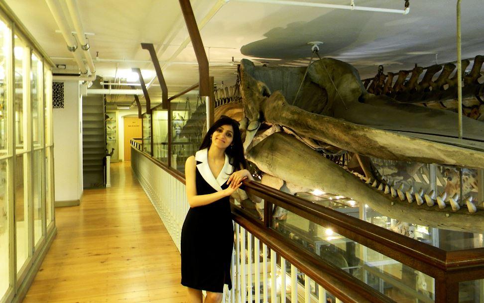 harvard university natural history museum
